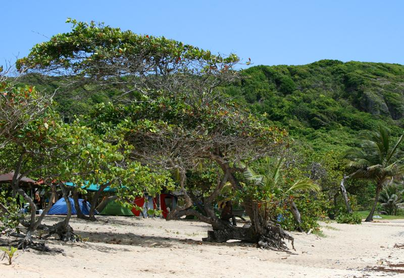 At Anse Maurice, Petit-Canal, camping and picnic