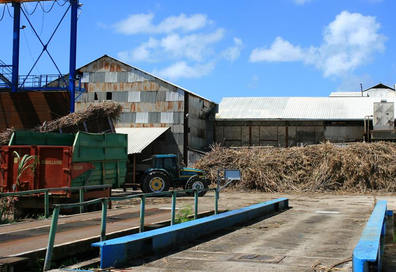 The tons of canes are deposited before being crushed