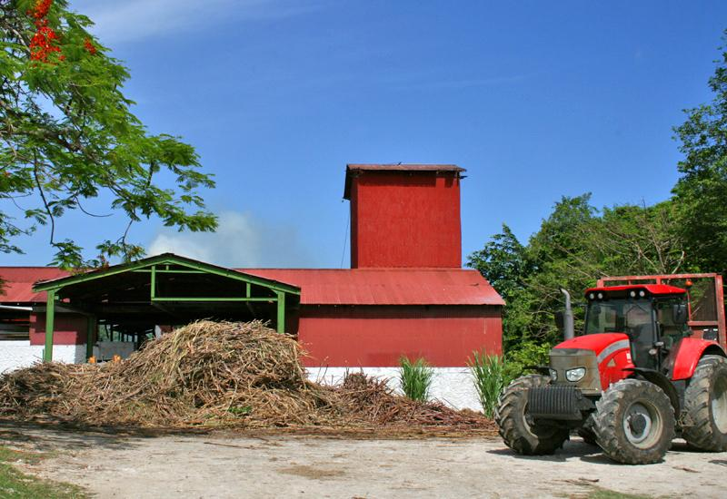 During the harvest period, the cane is transported daily to the factory