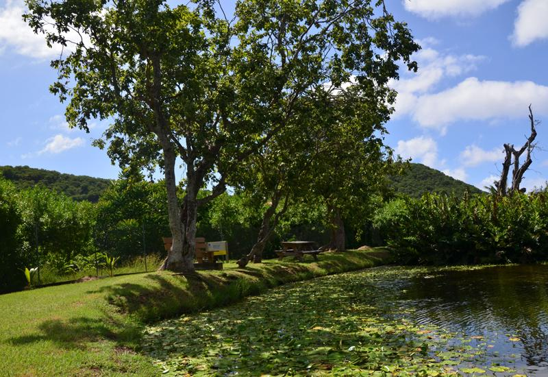 Mare de Grand Trou (Big hole pond) - Terre-de-Bas. For a break or a nice picnic