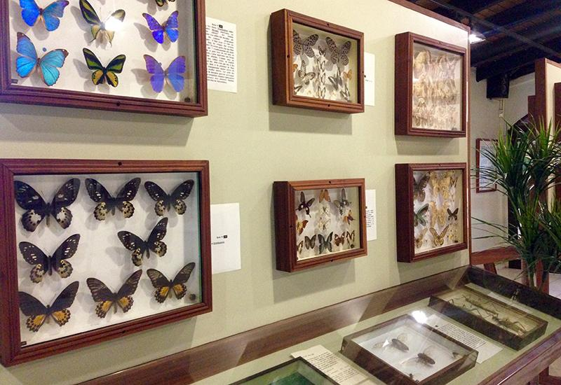The museum accomodates an exceptional collection of butterflies