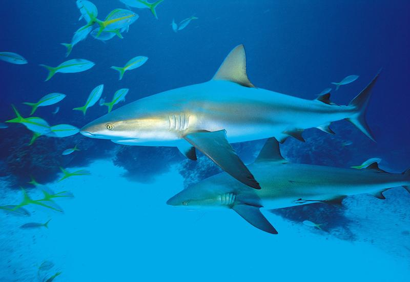 Aquarium of Guadeloupe in Le Gosier: sharks