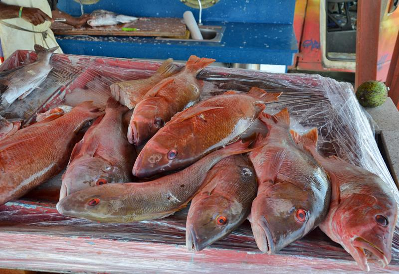 Central Market of Basse-Terre. Stall of fish in specially arranged space