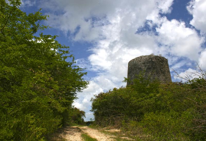 Moulin de Budan - Anse-Bertrand: hidden in bushy vegetation